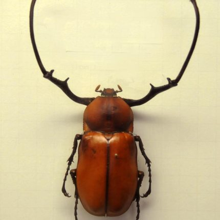 schöner fremder käfer