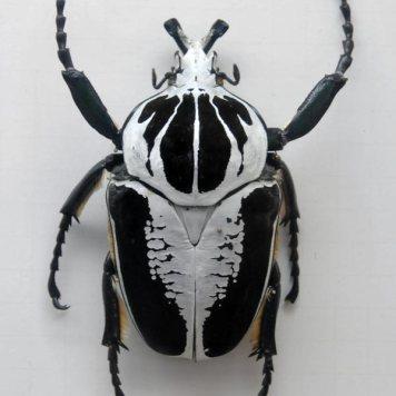 schöner käfer in nahaufnahme